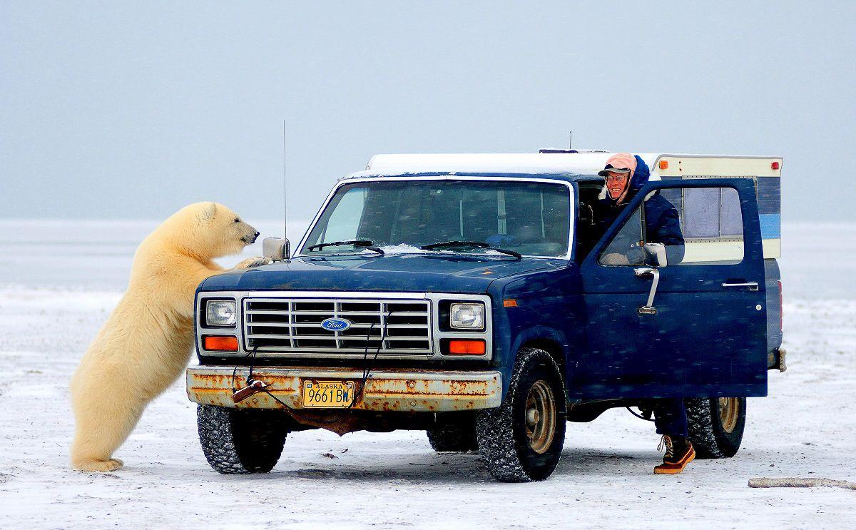 Richard Nelson and a curious polar bear near Kaktovik, Alaska, October 2005. (Steven Kozlowski photo)