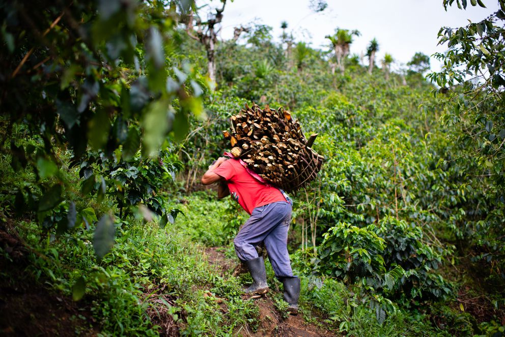 Rejino Villatoro Vásquez, 38, carries a load of wood trimmed from coffee plants up a mountainside path. (Photos by Sarah L. Voisin/The Washington Post)