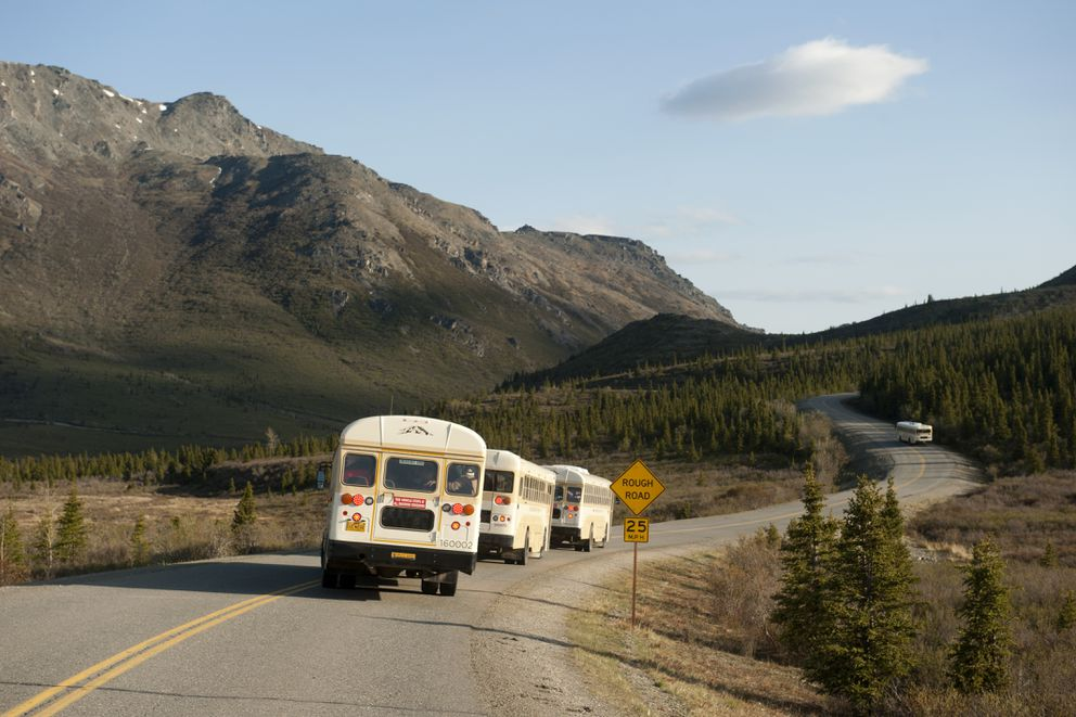 A line of tourist buses stop to look at caribou along the park road in Denali National Park and Preserve on Thursday, May 19, 2016. (Bob Hallinen / Alaska Dispatch News)