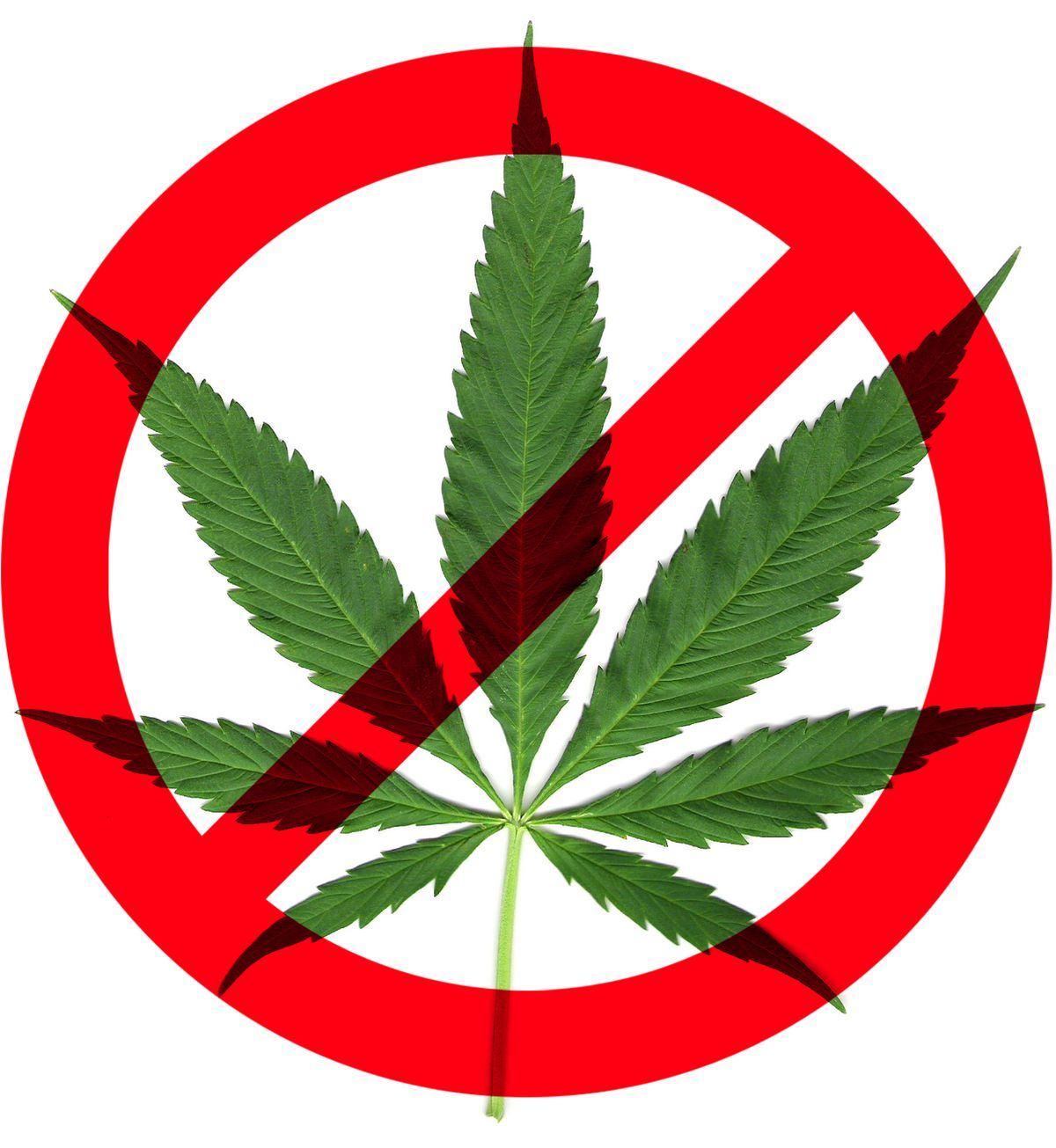marijuana should be banned Marijuana is still illegal in the majority of states, so it has to remain a banned substance marijuana should be a banned substance but a year-long suspension or a six-month suspension or whatever for one positive test [administered by the ncaa] is.