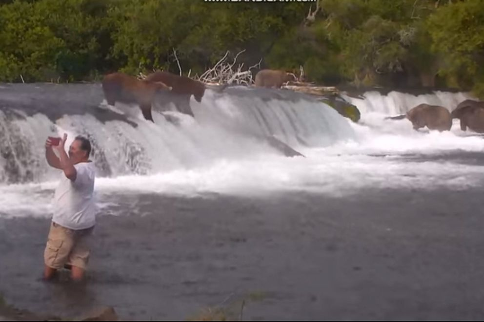 A man, apparently taking a selfie with the bears at Brooks Falls, Thursday, Aug. 9, 2018, is among three people facing criminal charges for going where they shouldn't have. (Screen grab from Brooks Camp bear cam at Explorer.org)