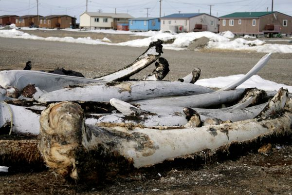 OPINION: Risk to Inupiaq people is just too high to allow Shell to drill in the Arctic Ocean. Pictured: Old whale bones weather in the village of Point Hope on the Chukchi Sea on Alaska's arctic coast.