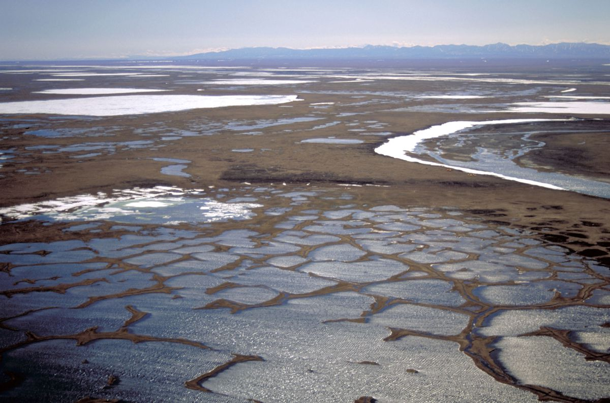 The coastal plain of the Arctic National Wildlife Refuge. (Photo by U.S. Fish & Wildlife Service)