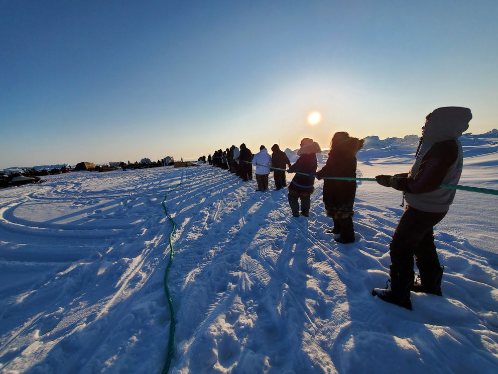 People join together on the rope to help pull in the bowhead whale landed by Ikayuaq Crew out of Utqiaġvik. It's been a busy season for the crews of the North Slope's hub community and everyone who supports them. There have been more than 10 bowheads landed so far this season. (Photo by Christopher Tuniqtaq Danner)