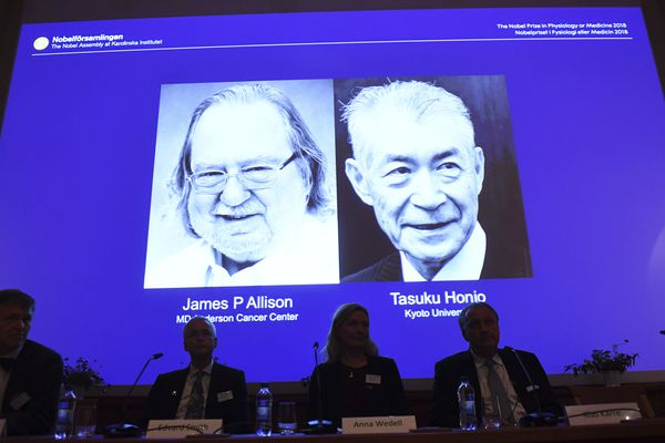 The Nobel prize laureate in medicine or physiology 2018 is shown on the screen James P Allison, left, and Tasuku Honjo, during the presentation at the Karolinska Institute in Stockholm, Sweden, Monday Oct. 1, 2018. The citation for this year's Nobel Prize in Medicine says the two honorees developed therapies for treating cancer. (Fredrik Sandberg/TT via AP)