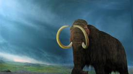Alaska's woolly mammoths perished due to spreading tundra and hunters