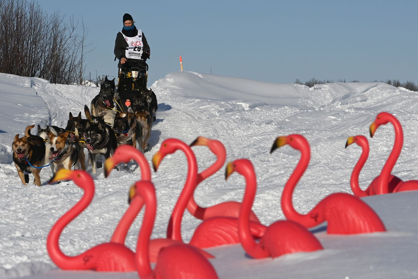 Mille Porsild and her dog team pass by Camp Flamingo on the Susitna River at the start of the Iditarod Sunday, March 7. (Bill Roth / ADN)