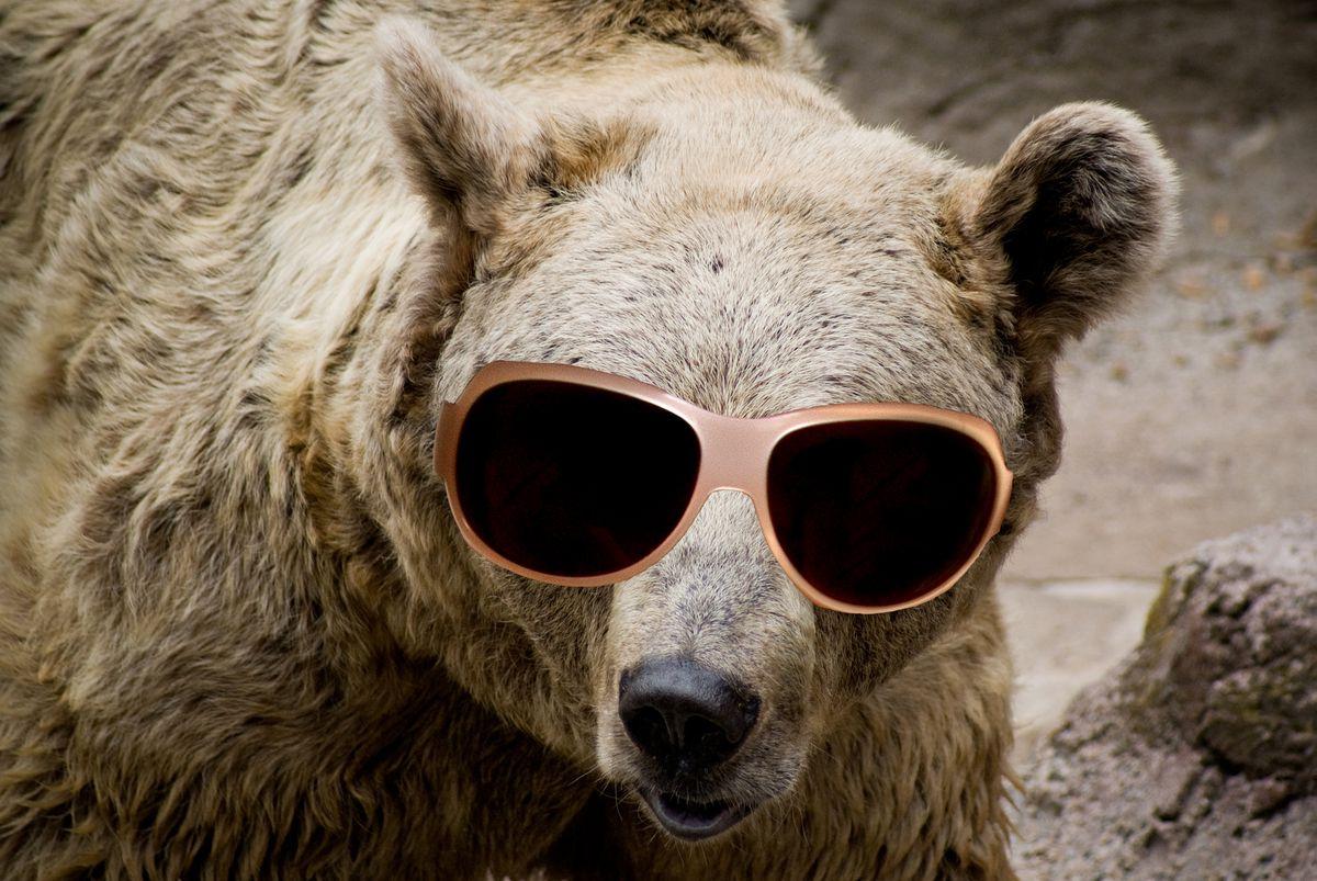 Old Crazy Bear Killed After Attacking Alaska Bird Watcher