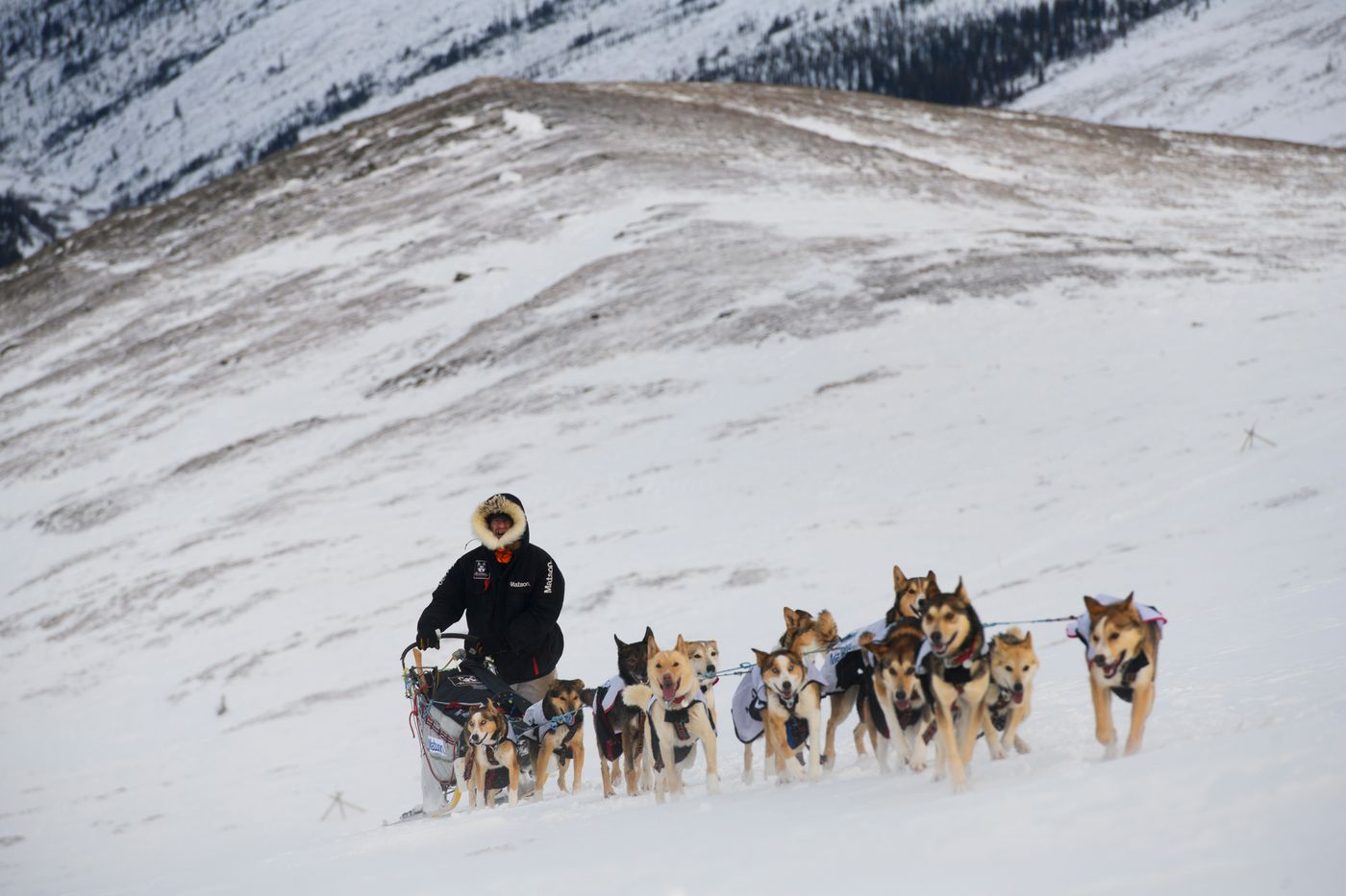 Allen Moore, of Two Rivers, climbs toward Eagle Summit with his team. Yukon Quest International Sled Dog Race frontrunners passed checkpoints along the Steese Highway on February 10, 2019. (Marc Lester / ADN)