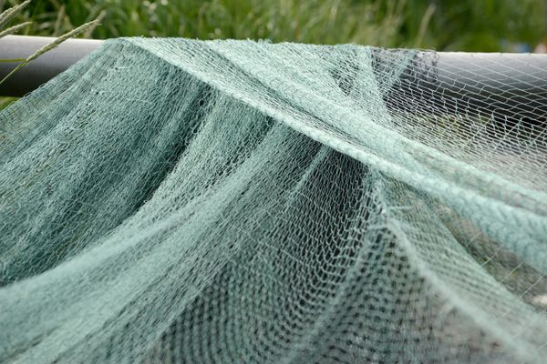 A west Kodiak's setnetter's fishing nets hang in preparation of being mended, July 11, 2017. (Anne Raup / Alaska Dispatch News)