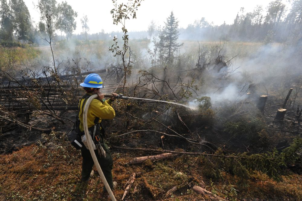 Firefighter / medic Jess St. Laurent puts out a hot spot while mopping up during the McKinley Fire along the Parks on Tuesday, Aug. 20, 2019. (Bill Roth / ADN)