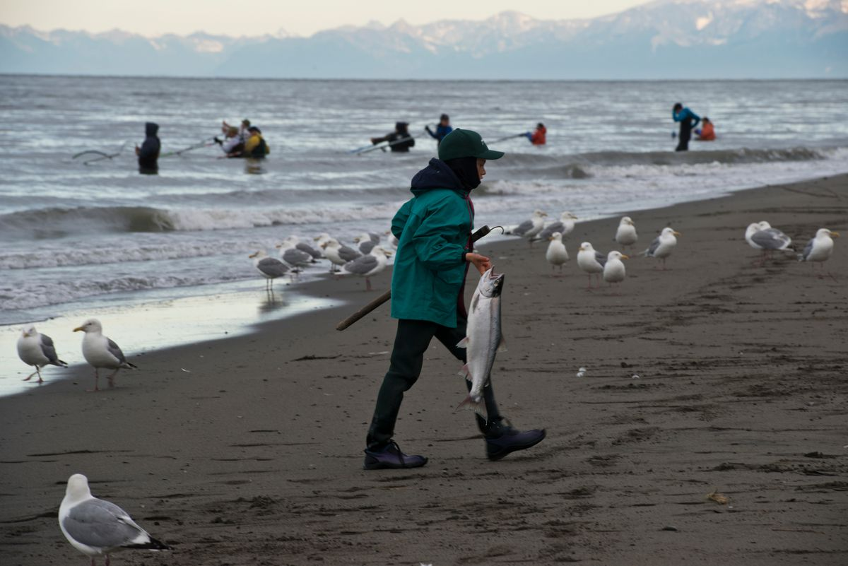 Alaskans line the banks at the mouth of the Kenai River in Kenai for the sockeye salmon dipnet fishery. (Marc Lester / ADN)