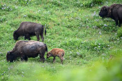 Kodiak and the Alaska Panhandle: Lush green landscapes are just the beginning