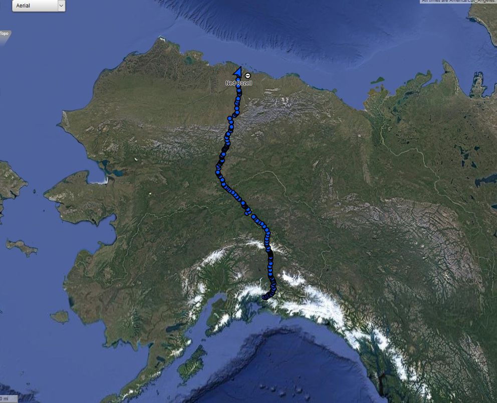 The pathway of Ned Rozell and his dog Cora's 96-day summer walk, across Alaska along the path of the trans-Alaska pipeline. (Ned Rozell)