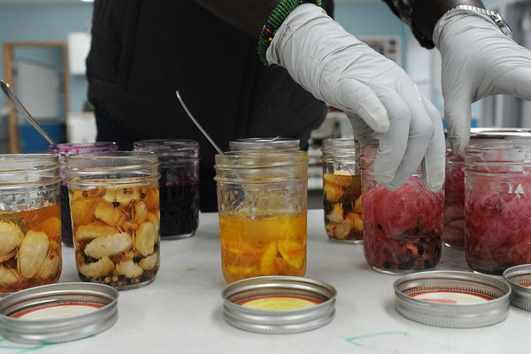 Athieng Aguer arranges samples at a pickling and fermentation class for refugees at St. Anthony's Church in east Anchorage, Alaska on Saturday, Dec. 9, 2017. The Catholic Social Services class is an extension of the summer gardening program. (Bob Hallinen / ADN)