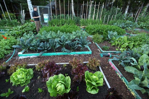 Started by the late Mardane Connor, about five households share duties on this mostly vegetable garden located on a Pacific View Neighborhood in Anchorage. Mardane's Garden will be featured on this years City Garden Tour that is to take place on July 29, 2012.