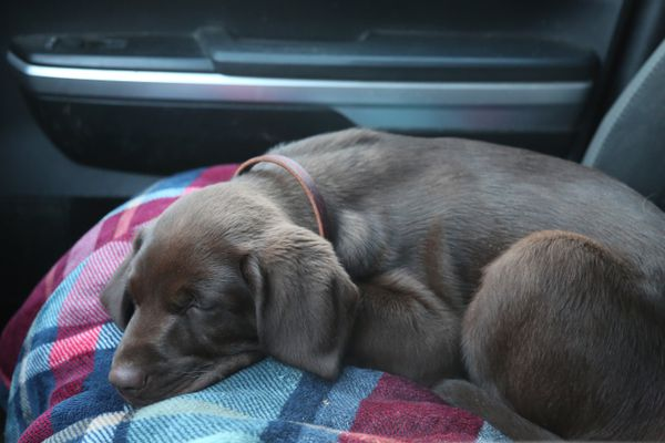 Rigby, in short order has become a great little travel companion. (Photo by Steve Meyer)