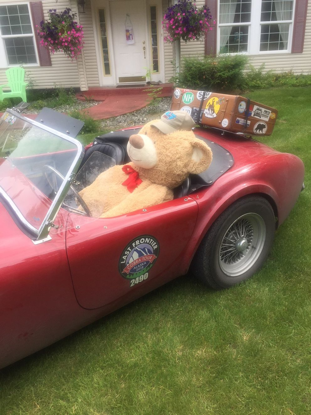 Friends left a gift in Tom Cotter's Shelby Cobra after a real bear broke in and damaged it. (Courtesy David Karpik)