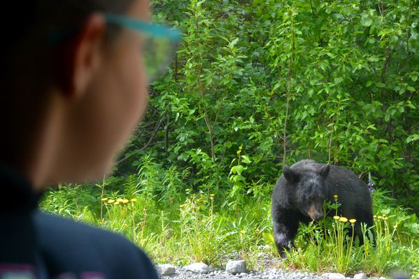 A camper in the Kenai Watershed Forum's