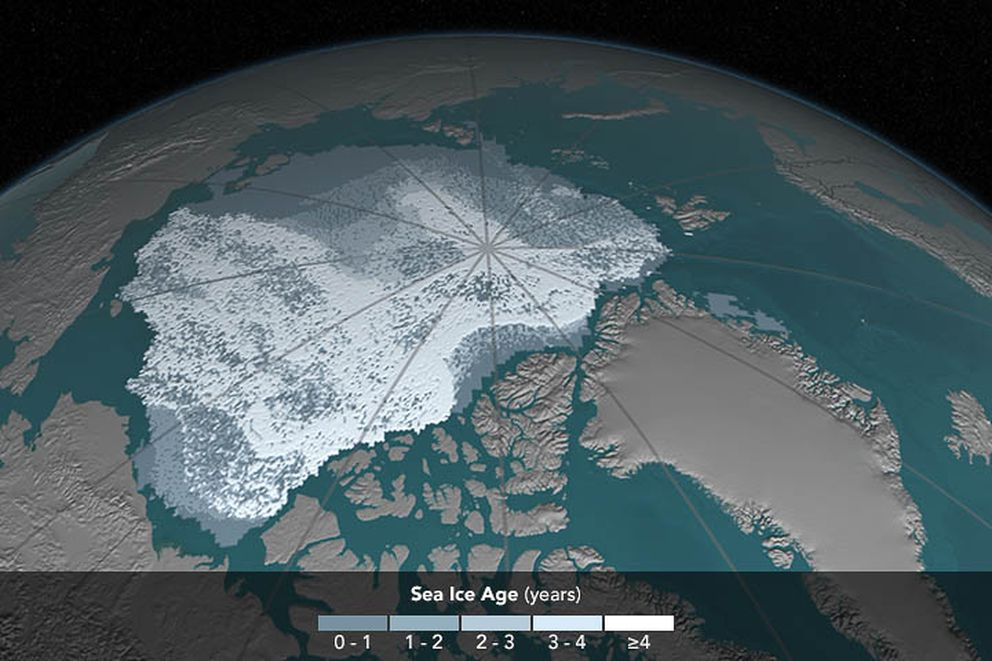 Arctic sea ice coverage, 1984. The area covered by Arctic sea ice at least 4 years old has decreased from 718,000 square miles in September 1984 to 42,000 square miles in September 2016. Ice that has built up over the years tends to be thicker and less vulnerable to melting away than newer ice. In these visualizations of data from buoys, weather stations, satellites and computer models, the age of the ice is indicated by shades ranging from blue-gray for the youngest ice to white for the oldest. (Visualization by Cindy Starr / NASA)