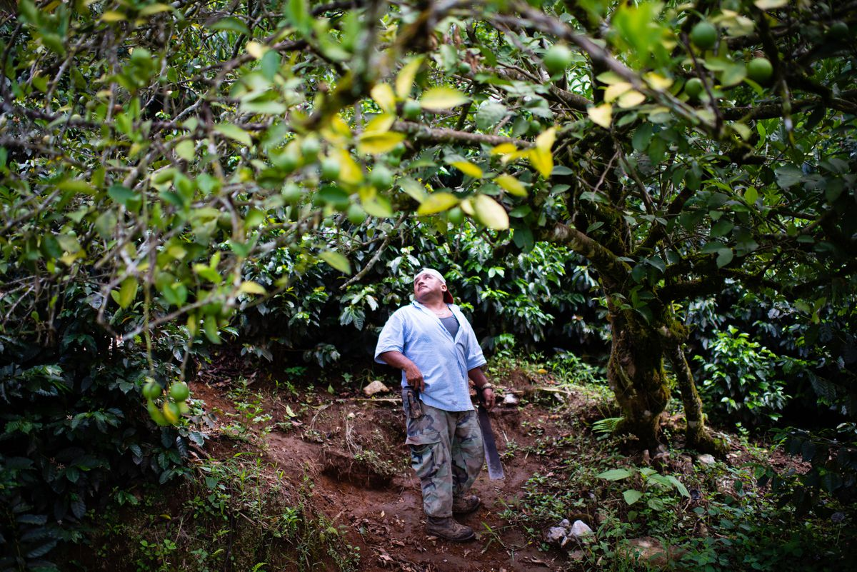 Rodrigo Carrillo, a farmer in Hoja Blanca, Guatemala, says falling coffee prices mean he can no longer make a profit on the once-lucrative crop. (Washington Post photo by Sarah L. Voisin)