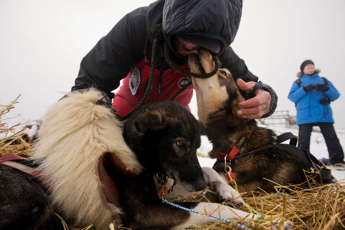 Lance Mackey greets his dogs after arriving in Unalakleet on March 11, 2019, during the Iditarod Trail Sled Dog Race. (Marc Lester / ADN)