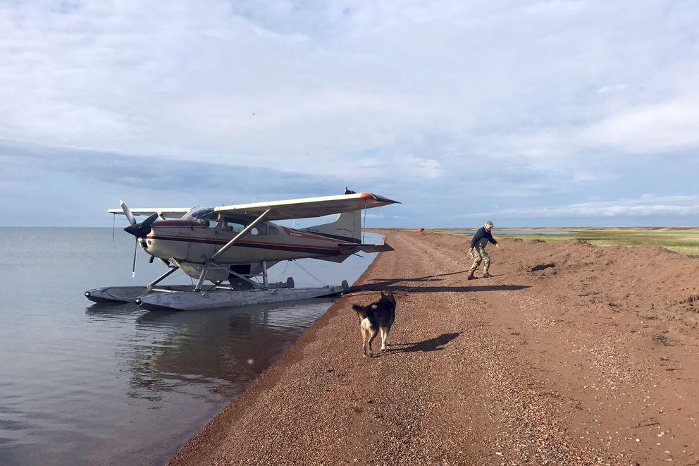 Jim Webster anchors his plane at Teshekpuk Lake in July 2017. Ben Jones' dog runs along the shore. (Photo by Ben Jones)