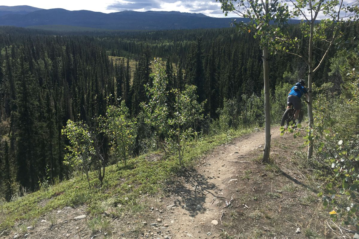 Wes Hoskins rides the Porcupine Ridge trail, a 6 kilometer single track trail in the Mt. McIntyre Recreation Area in Whitehorse, Yukon, Canada, on Aug. 18. (Photo by Alli Harvey)