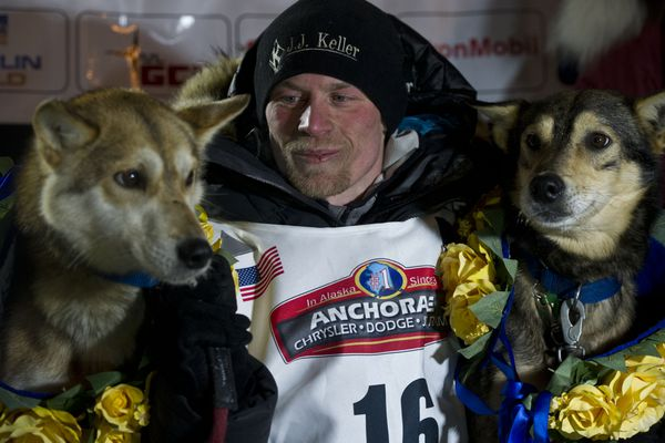 Marc Lester / Alaska Dispatch News Dallas Seavey arrived in Nome and claimed his fourth Iditarod championship in five years on March 15, 2016. Seavey's lead dogs Reef (left) and Tide are under the burled arch with Seavey.