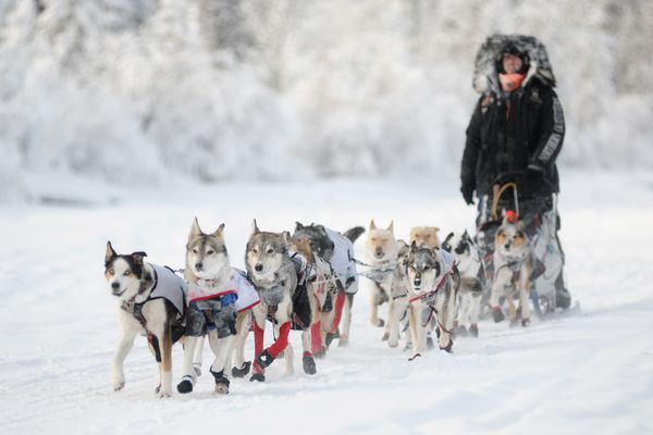 Allen Moore's lead dogs, Scruggs, left, and Quito lead him into the Yukon community of Carmacks early Saturday afternoon, Feb. 8, 2014. The Yukon Quest's defending champion from Two Rivers, Alaska, is holding onto first place by a slim margin over Eureka, Alaska, musher Brent Sass. Marcel Vander Wier/Whitehorse Star
