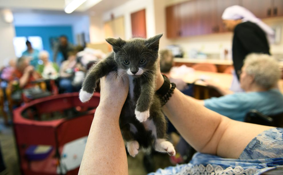 Kat Wickstrom holds up a 7-week old kitten named Lion. (Marc Lester / ADN)