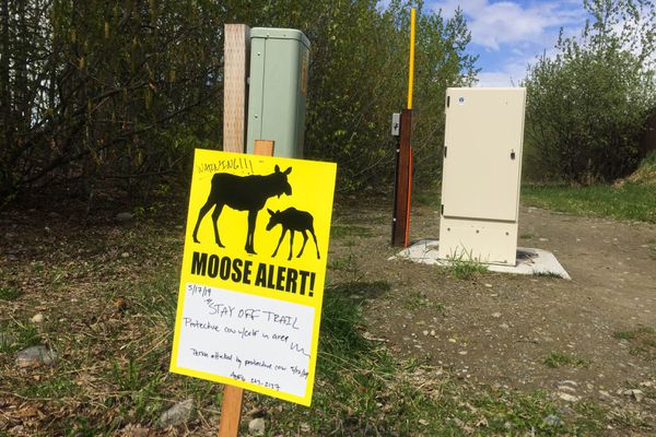 A sign warns people to stay off a trail near the Eaglewood neighborhood in Eagle River on Friday, May 17. (Matt Tunseth / Chugiak-Eagle River Star)