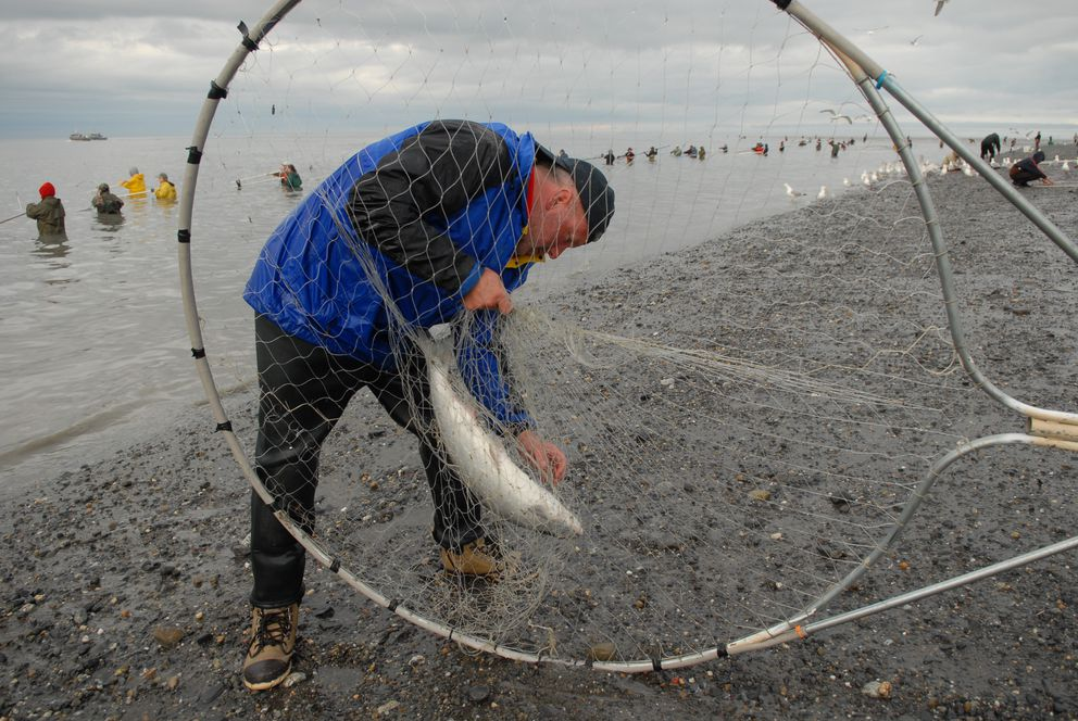 Here s what you need to know as the kenai river salmon for Salmon fishing anchorage