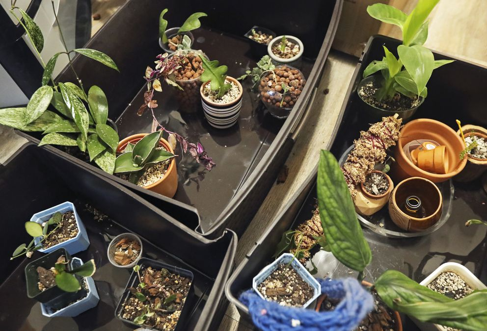 Sky O'Neal, an Anchorage woman who helped start the Facebook group, Alaska Haus of Plants, recently moved and transferred her nearly 200 plants with her to her new home. Photographed on Wednesday, May 26, 2021, some plants remained in their moving boxes on the floor of her kitchen. (Emily Mesner / ADN)