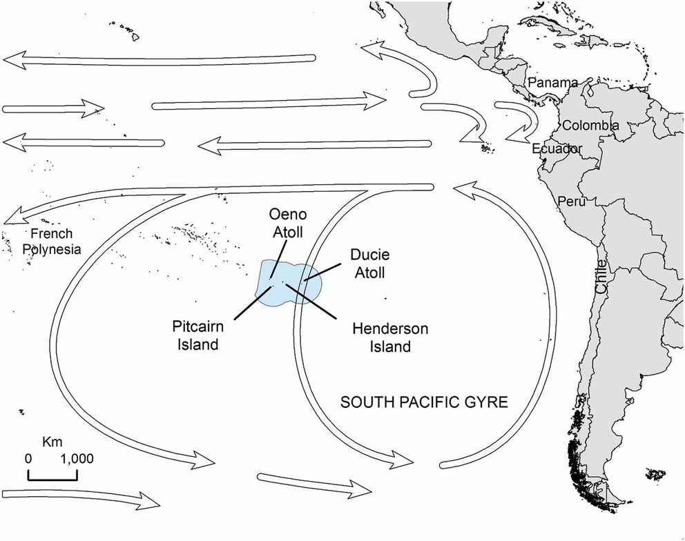 The location of Henderson Island. The boundary of the Pitcairn Islands Exclusive Economic Area is shown in light blue. Arrows indicate the direction of major oceanic currents and the South Pacific Gyre. (Proceedings of the National Academy of Sciences)