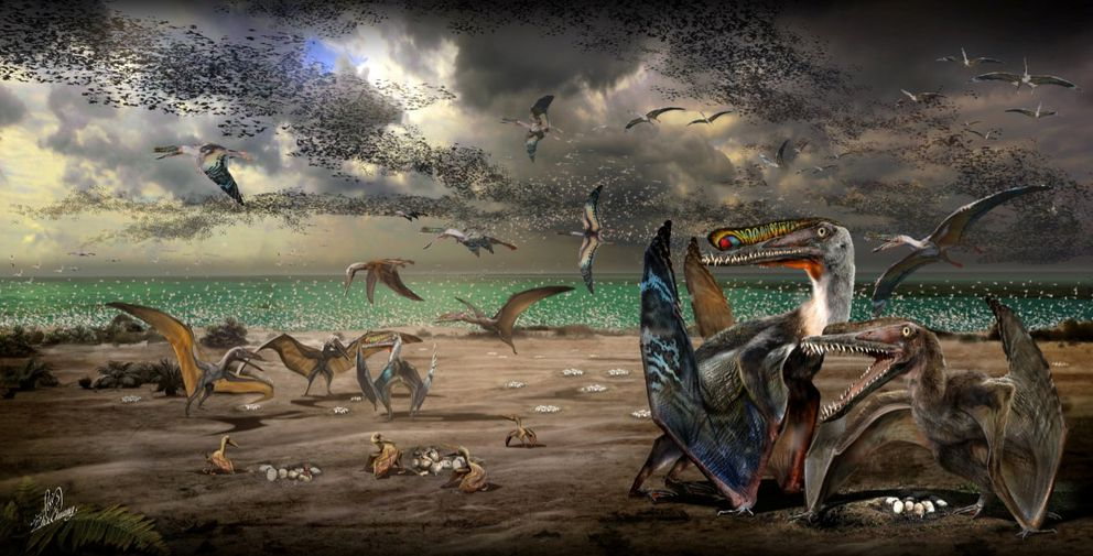 An artist's illustration shows individuals from the fish-eating pterosaur species Hamipterus tianshanensis.(Zhao Chuang / Handout via Reuters)