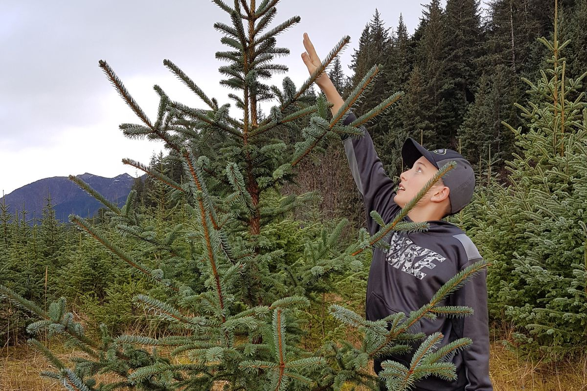 Owen Kirkland sizes up a potential candidate for his family's Christmas tree. (Erin Kirkland)