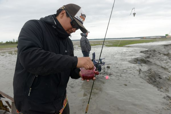 Mike Flanagan rigs his gear while fishing for king salmon at Ship Creek in Anchorage, AK on Saturday June 16, 2018. Saturday was the last day of the Slam'n Salm'n fishing derby and a kids fishing day with fishing pole giveaways, lunch and help from the Alaska Department of Fish and game personal. (Bob Hallinen / ADN)