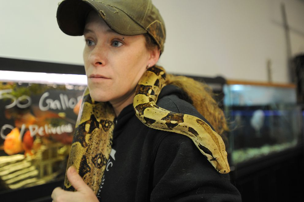 "Valley Aquatics and Reptile Rescue owner Sheridan Perkins holds a Colombian red-tailed boa named ""Mouse."" (Bill Roth / Alaska Dispatch News)"