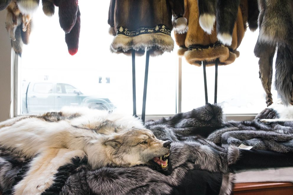 A wolf pelt rug in the display window at David Green Master Furrier on Feb. 24. (Loren Holmes / Alaska Dispatch News)