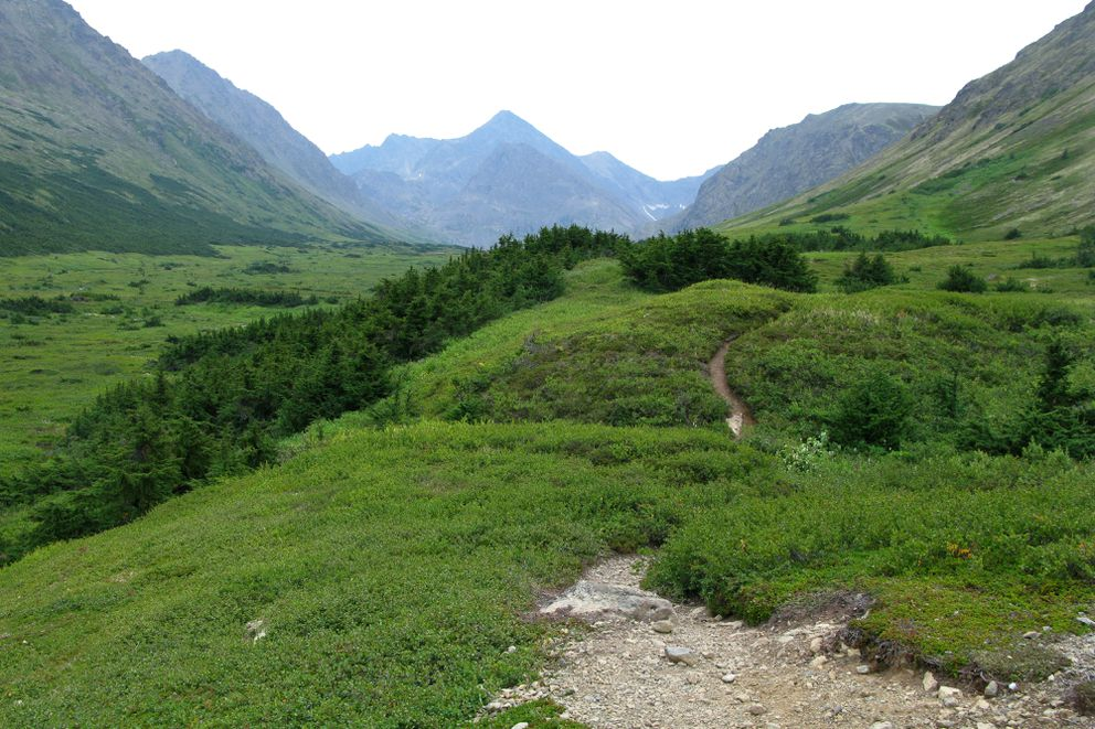 A trail leads up a verdant valley to Williwaw Lakes in Chugach State Park on Aug. 4, 2009. (Anne Raup / ADN archive)