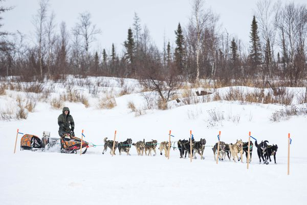 Jeff King mushes into the checkpoint of Iditarod on Thursday, March 8, 2018. (Loren Holmes / ADN)