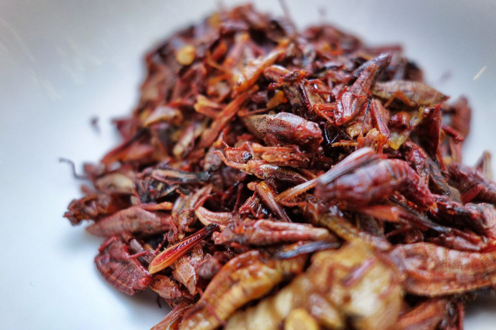 A dish of toasted, seasoned crickets at Los Danzantes restaurant in the Coyoacan neighborhood of Mexico City. (Photo by Scott McMurren)