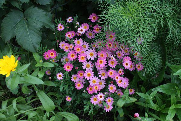 Flowers in Michael Ross' garden, Aug. 15, 2018. (Laurel Andrews/ADN)