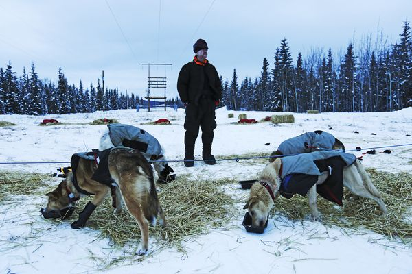 """Two-time Yukon Quest champion and expected 2018 winner Allen Moore stops to think — a rare sight on the Quest trail — before leaving Braeburn checkpoint Monday evening. """"Gotta love that,"""" Moore exclaimed as he watched his dogs gulp down food before the approximately 100-mile run to the finish line in Whitehorse, Yukon. Feb. 12, 2018. (Photo by Robin Wood/News-Miner)"""