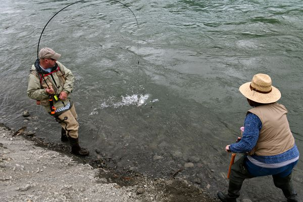 A fisherman brings in a sockeye salmon on the Kenai River on June 22, 2018. (Marc Lester / ADN)