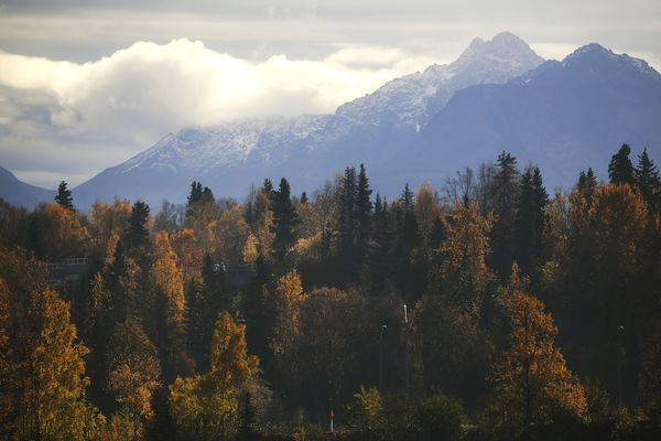 Autumn colors begin to dwindle near Westchester Lagoon in Anchorage on Oct. 6, 2020. (Emily Mesner / ADN)
