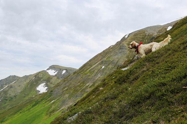 Hugo, surveying the country as I try to catch up. (Christine Cunningham photo)