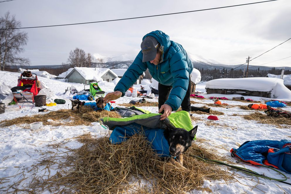 Jessie Holmes puts blankets on his dogs in Takotna on Wednesday, March 11, 2020 during the Iditarod Trail Sled Dog Race. (Loren Holmes / ADN)