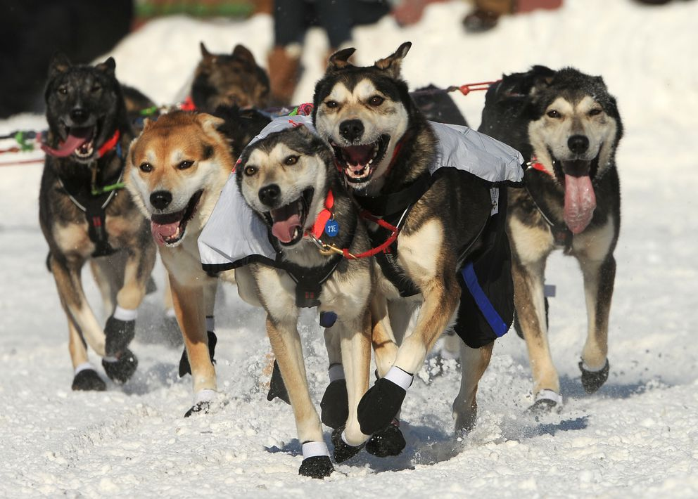 Kristy Berington's dog team makes the turn from Fourth Avenue onto Cordova Street during the ceremonial start of the Iditarod on Saturday. (Bob Hallinen / Alaska Dispatch News)